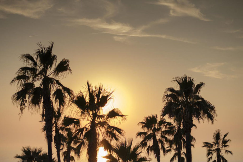 Sonnenuntergang Andalusien Palmen