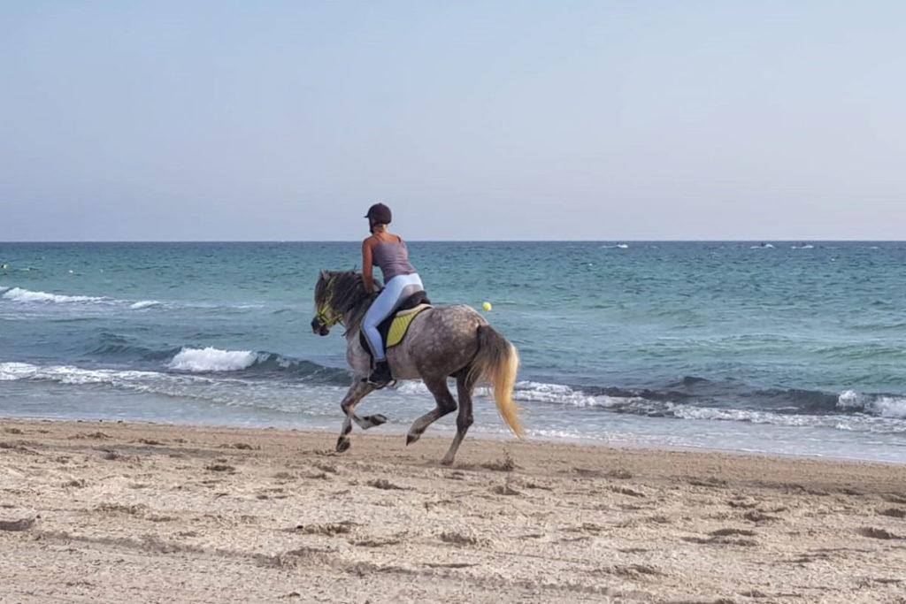 Reiten im Meer Djerba