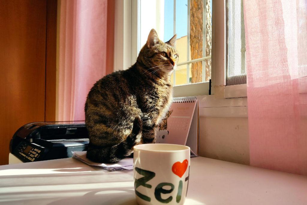 Katze Sibila