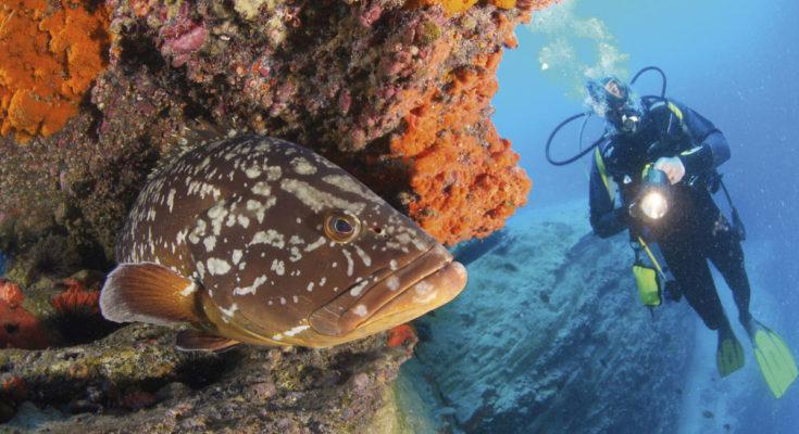 Unterwasserwelt Fuerteventura